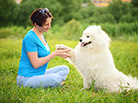 Spring Grooming for Dogs